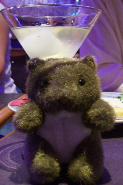 Wombat Wednesday: Margaritaville