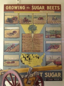 Growing beet sugar poster