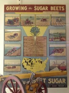 Growing beet sugar poster