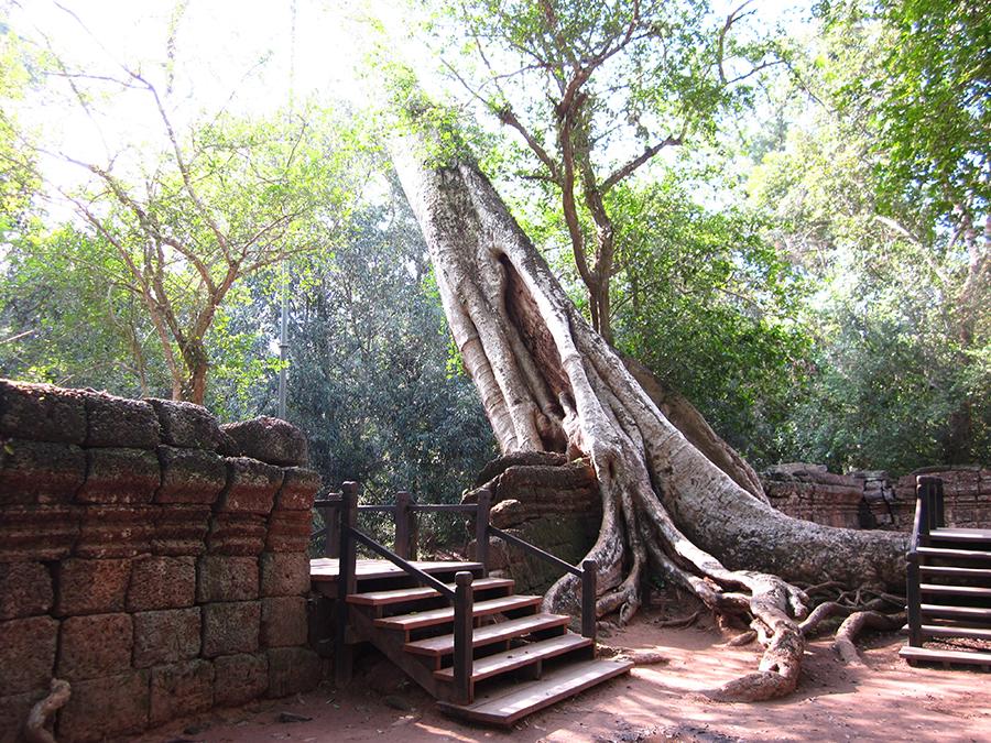 Ta Prohm temple, Angkor, Cambodia 2