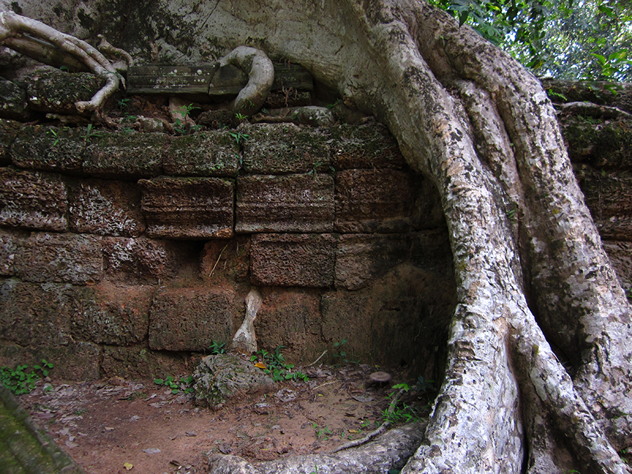 Ta Prohm temple, Angkor, Cambodia 3