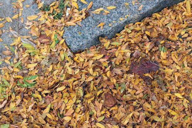 Autumn, Rockport