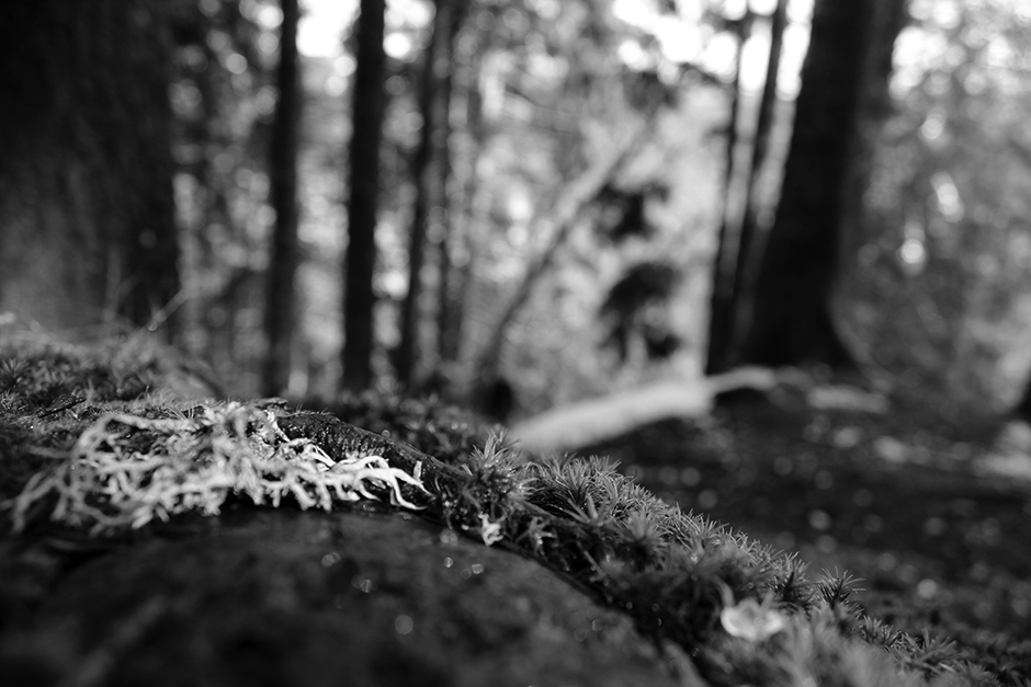 Schwarzwald (in black & white)