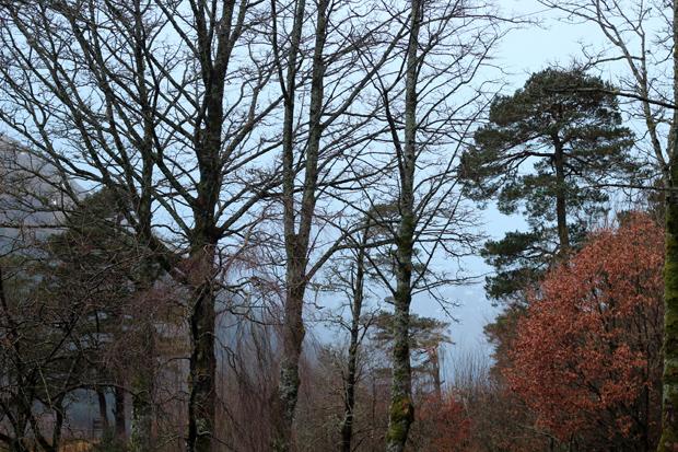 Scotland countryside