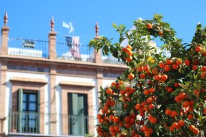 Sunny Seville