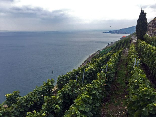 Lavaux Vineyards - UNESCO World Heritage Site