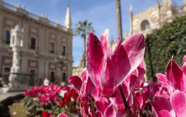 Seville is one of Spain's prettiest cities, with hot hot summers and warm winters
