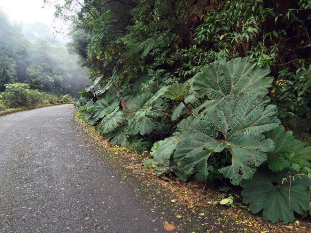poas-volcan
