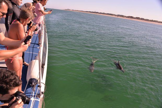 Swimming With Dolphins in Adelaide, Australia - Travels of Adam - https://travelsofadam.com/2017/05/swimming-dolphins-adelaide/