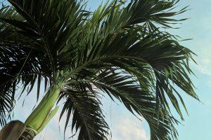 palm tree florida