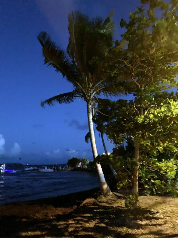 bioluminscent bay in puerto rico